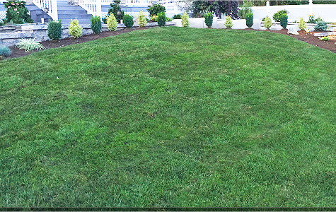 Lawncare in Northern NJ